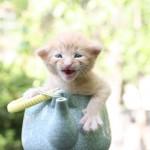 kitty in a teapot